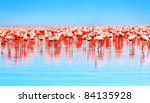 Flamingo Birds In The Lake...