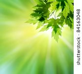 green leaves and sun | Shutterstock . vector #84163048