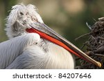 dalmatian pelican  pelecanus...   Shutterstock . vector #84207646