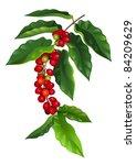 raster version  branch of... | Shutterstock . vector #84209629