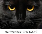 Stock photo closeup portrait of a halloween black cat 84216661