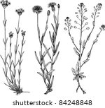 plants | Shutterstock .eps vector #84248848