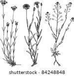plants | Shutterstock .eps vector #84248848