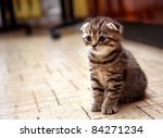 Stock photo curious striped scottish fold kitten 84271234