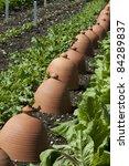 row of terracotta rhubarb... | Shutterstock . vector #84289837