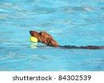 Cute Dog At A Swimming Pool