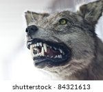 close up of an angry wolf | Shutterstock . vector #84321613