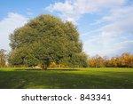 beautiful tree | Shutterstock . vector #843341