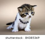 kitten of the british breed.... | Shutterstock . vector #84385369