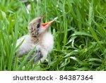 A Baby Bird Chick Sitting...