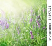 Lavender field floral  summer or spring background. Field with lavender flowers and beautiful bokeh lights - stock photo