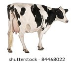 holstein cow  5 years old ... | Shutterstock . vector #84468022