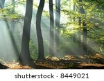 sunbeams pour into the autumn forest creating a mystical ambiance - stock photo