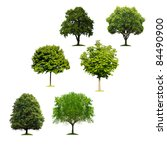 trees isolated on white... | Shutterstock . vector #84490900