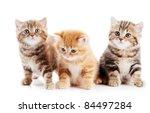 Stock photo three lying british shorthair kittens cat isolated 84497284