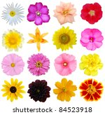 a set of flower heads on white | Shutterstock . vector #84523918