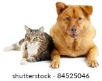 Stock photo cat and dog on white background 84525046