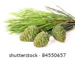 Pine Cone And Branch Isolated...