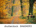 colorful autumn | Shutterstock . vector #84604093