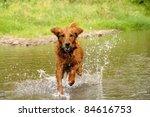 Running Wet Orange Golden...