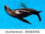 seal | Shutterstock . vector #84683446