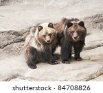 Grizzly Bear Cubs (Ursus arctos horribilis)  native to Northern continental U.S., Alaska, western Canada - stock photo