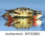 Live Blue Crab On Blue...