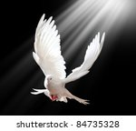 A Free Flying White Dove...