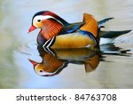 Closeup Male Mandarin Duck  Ai...
