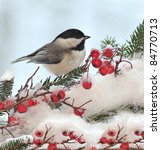 A Winter Black  Capped...