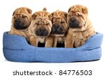 Stock photo group of beautiful sharpei puppies isolated on white background 84776503