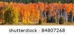 Autumn Trees Panoramic View  I...
