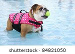 a dog in a swimming pool - stock photo