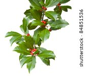 Small photo of American holly branch sprig (iilex opaca) with leaves and berries isolated on white for Christmas. The female holly tree has red berries.