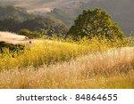 Black Bird In Golden Field Of...