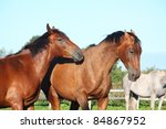 two brown horses fighting   Shutterstock . vector #84867952