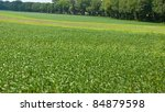 harvest of peas growing on the...   Shutterstock . vector #84879598