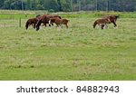 Three Clydesdale Mares With...