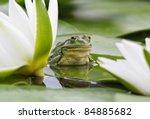 Frog Sits On A Green Leaf Amon...