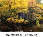 Japanese Autumn Scenery In River
