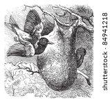 Baltimore Oriole Or Icterus...