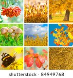 autumn collage showing... | Shutterstock . vector #84949768