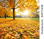 colorful foliage in the autumn...   Shutterstock . vector #84971638