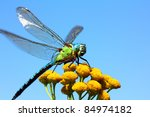 Dragonfly Sitting On Yellow...