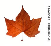 Fall leaf isolated over white with clipping path - stock photo