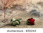 Lost Dry Rose Laying On The...