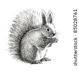 fluffy squirrel   Shutterstock . vector #85028761