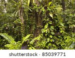 Interior Of Tropical Rainfores...