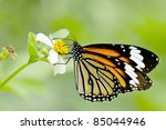 Color Butterfly On Flower