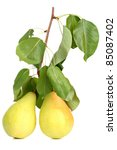 Two Pears On A Branch With...